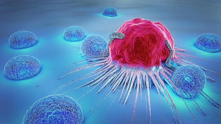 lymphocyte image
